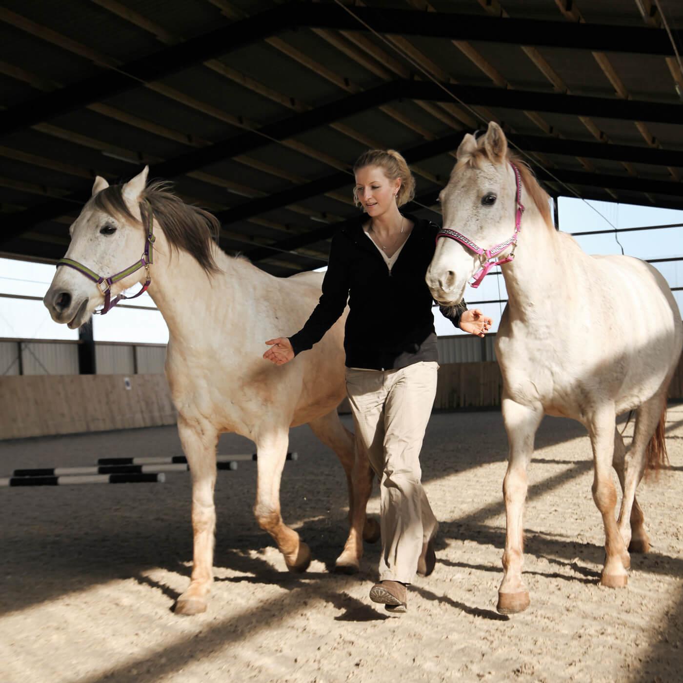 Cromme Coaching – Pferdegestützte Persönlichkeitsentwicklung: Pferde als Experten der Kommunikation spiegeln unsere Körpersprache und zeigen uns so, was wir unbewusst mitteilen.