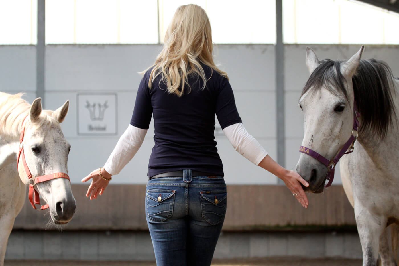 Cromme Coaching: Pferdecoaching – Das direkte Spiegelbild