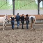Cromme Coaching (Johanna Cromme) – Pferdegestützte Persönlichkeitsentwicklung / Pferdecoaching / Coaching mit Pferden: Teamcoaching, Einzelcoaching u.v.m.